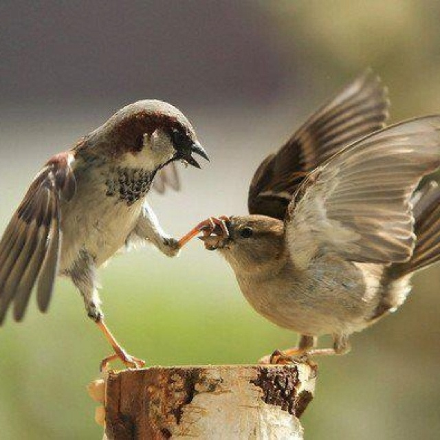 Shhh!: Stop Talk, Talk Too Much, Shutup, Funny Animal Pictures, Funny Birds, Animal Photo, Mouths, Shut Up, Sparrow