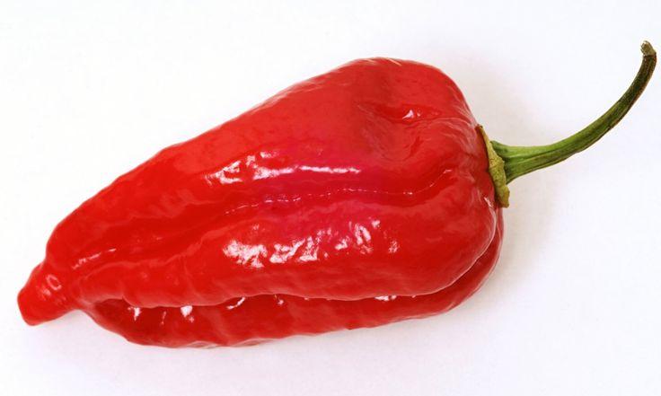 Dorset Naga Chili (Capsicum Chinense) 1,000,000 SHU- SuperHot Chilli Organic Seeds) World's Hottest Pepper