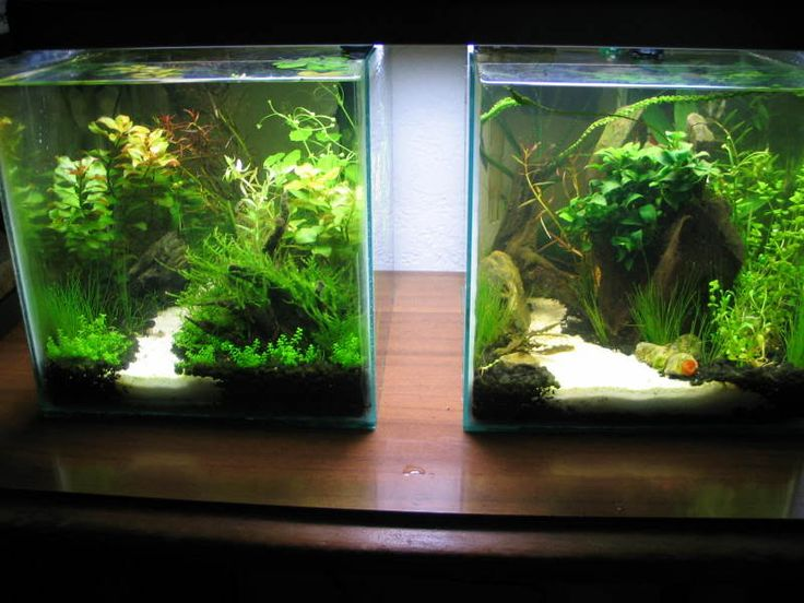 17 best images about aquascape on pinterest cichlids for Planted fish tank