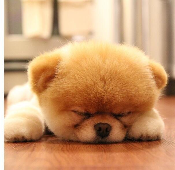 So tired. Cute puppy photo.