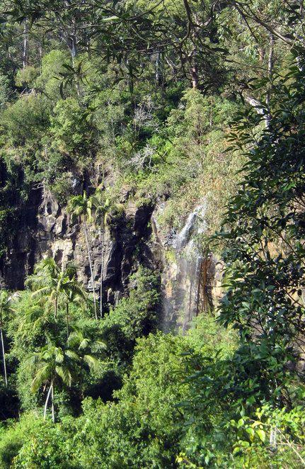 Cameron Falls, Mt Tamborine