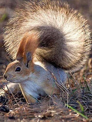 Easy, breezy, beautiful. Cover  Squirrel.