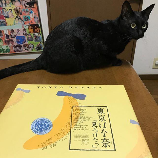 ・ 就職面接も無事終了👍 東京一人旅もかなり満喫〜♪ 台風で心配してた飛行機も無事に飛んで✈️ 今日また宮崎に戻りまーす😊 ・ ・ ・ #高3男子 #就職面接 #お疲れ様でした #東京土産 #定番 #東京バナナ #愛猫 #ミーちゃん #明日から仕事 #めっちゃ頑張る