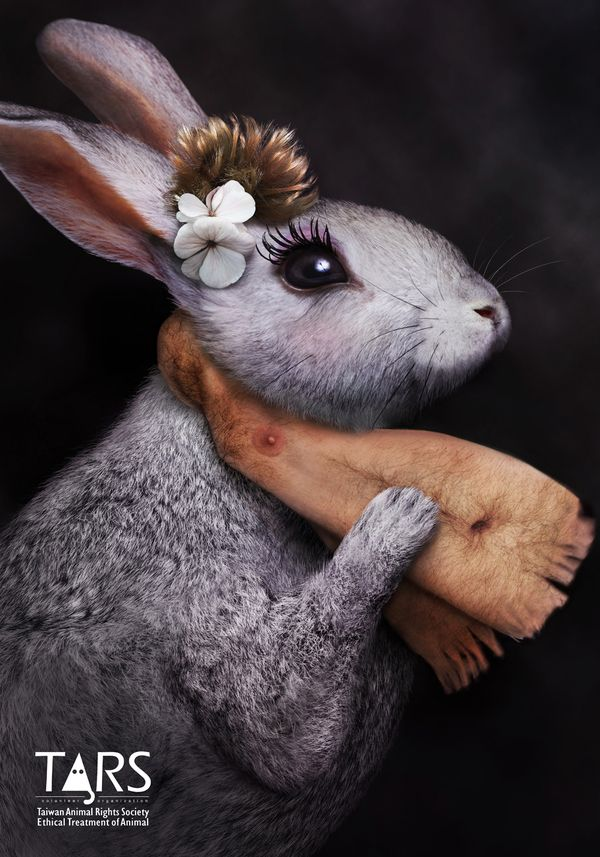 This advertisement tries to make the viewer aware that animals are not suitable for fashion attire. 2009