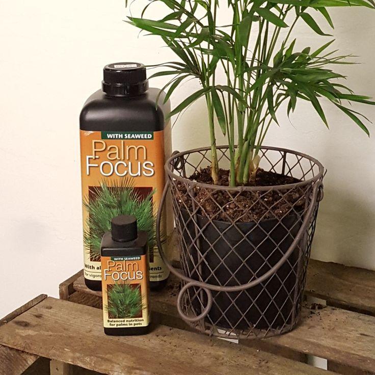 Växtnäring till dina palm-plantor!