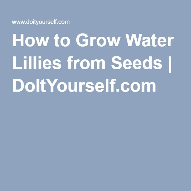 How to Grow Water Lillies from Seeds | DoItYourself.com