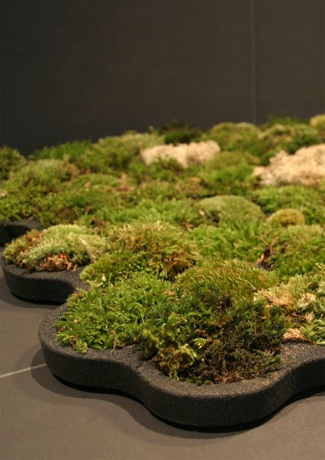 moss bath matt. it gets watered as you get out of the shower. THIS IS SO COOL!