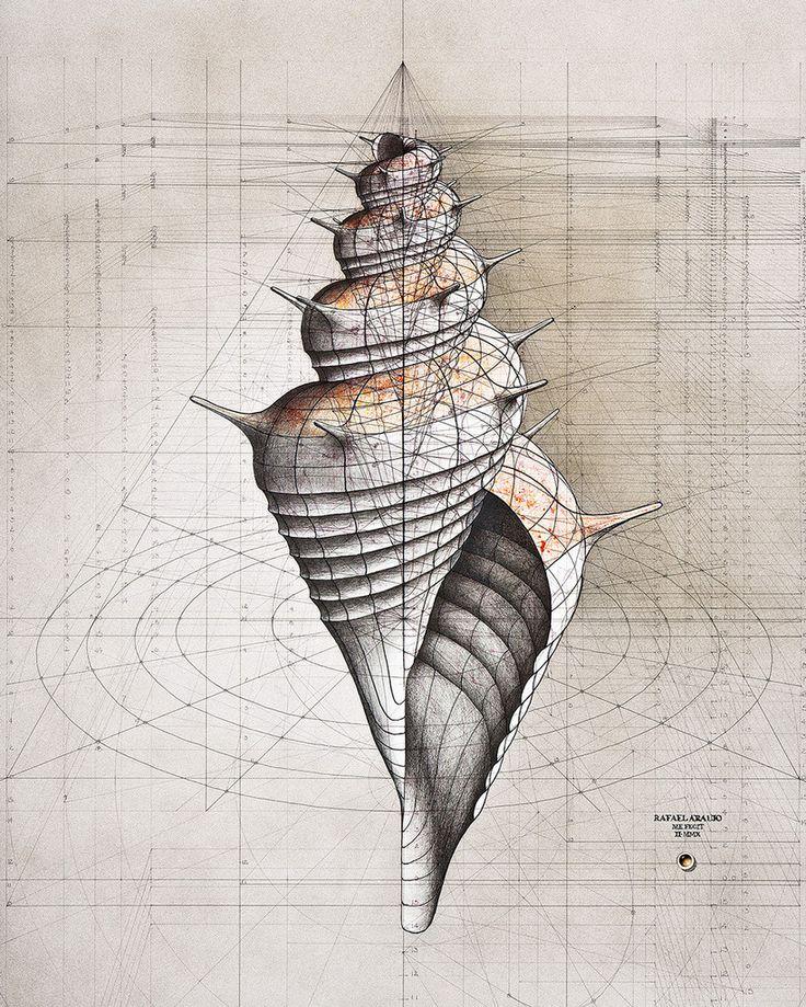 Murex – The Colossal Shop. Rafael Araujo's Calculations series