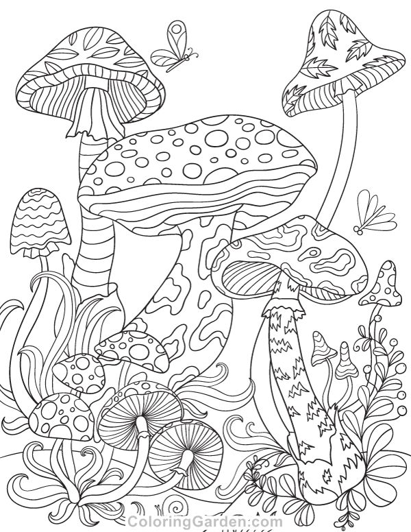 Free printable mushrooms adult coloring page. Download it in PDF format at http://coloringgarden.com/download/mushrooms-coloring-page/