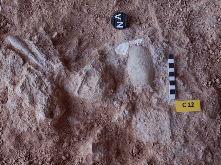 Fauna a nivel XII en el yacimiento de la Cova del Bolomor (Tavernes de la Valldigna)