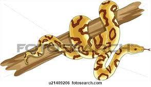 Image result for snake graphic artwork