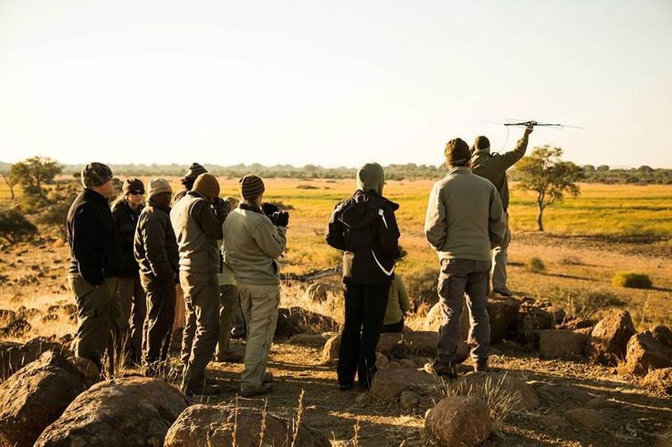 Using telemetry to locate Pitsani the leopard