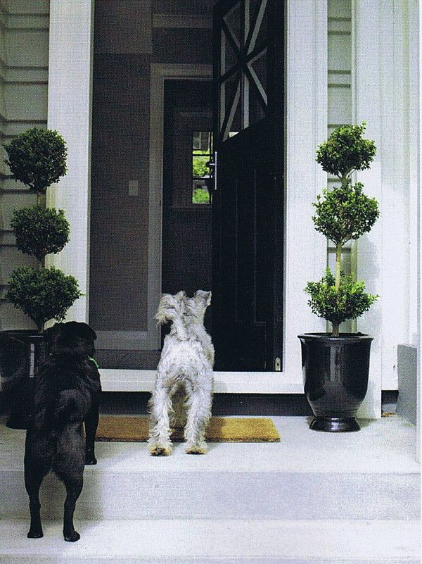 Topiaries in black pots at the front door, with beloved dogs Ned & Nonu. Photo courtesy of NZ House & Garden.  Designed by Rach Matthews, HEDGE Garden Design & Nursery