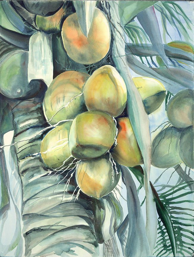 Coconuts By Ileana Carreno Coconut Tree Drawing Tree Sketches
