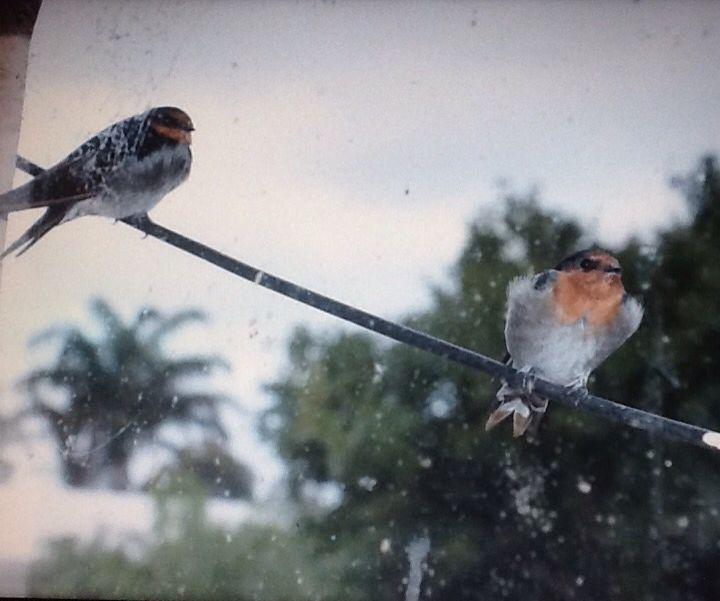Birds at the window
