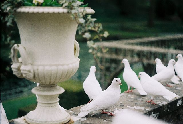 messengers of peace   by somehowlou, via Flickr