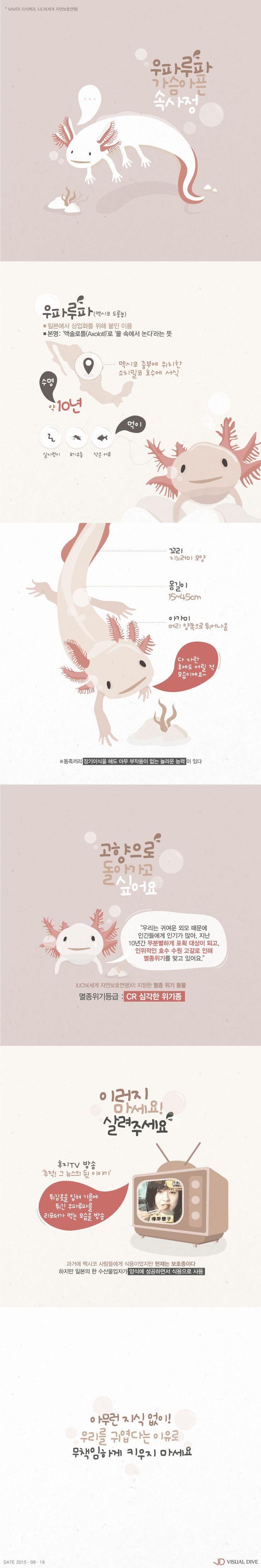 '우파루파'의 가슴 아픈 속사정을 아시나요? [인포그래픽] #Axolotl / #Infographic ⓒ 비주얼다이브 무단 복사·전재·재배포…