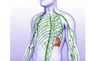 The lymphatic system is a network of vessels, nodes, and ducts that collect, filter, and return lymph to blood circulation.