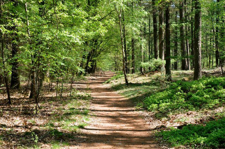 Afbeeldingsresultaat voor bospad