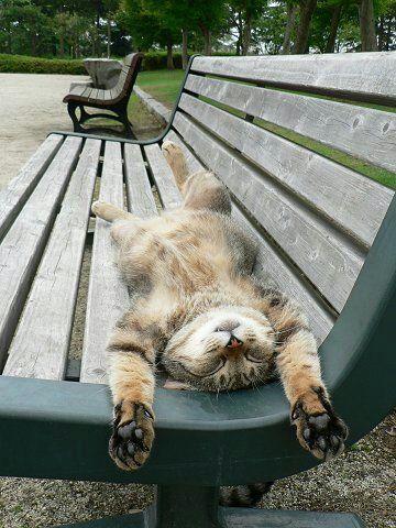 """Chouette !  """"Je n'fais rien, Je m'repose, je suis très heureux ainsi""""...J'ai le banc pour moi tout seul...c'est super, et j'en profite un max....il fait si chaud...si chaud...."""