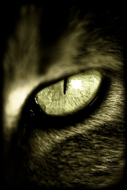 "...""Cats' eyes seem a bridge to world beyond the one we know."" --Lynn Hollyn"