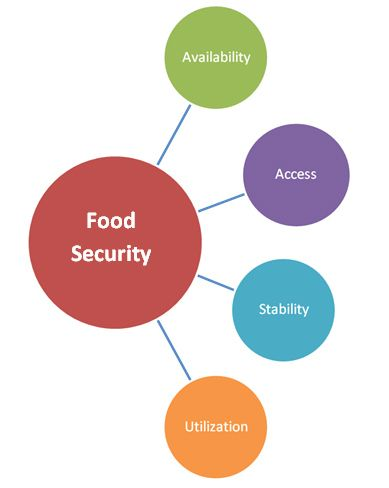 Descriptive Essay Example Food Security Diagram 15 August Essay also How To Write Paragraphs In An Essay  Best World Food Security Images On Pinterest  Food Security  Against Capital Punishment Essay