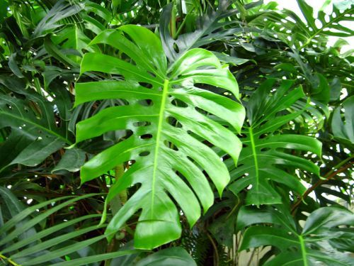 25 best ideas about plante interieur depolluante on for Plantes exotiques d interieur
