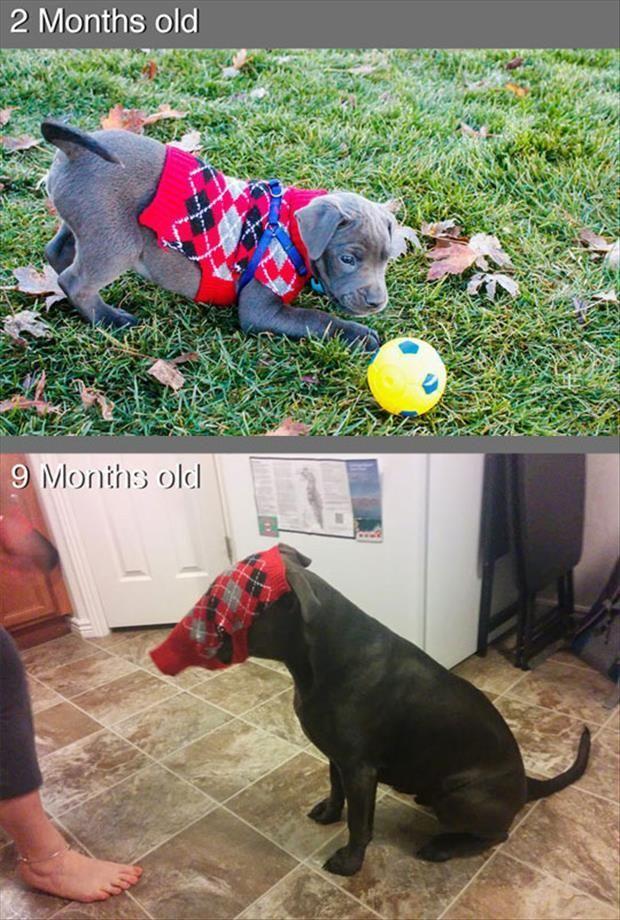 2 maanden oud, 9 maanden oud