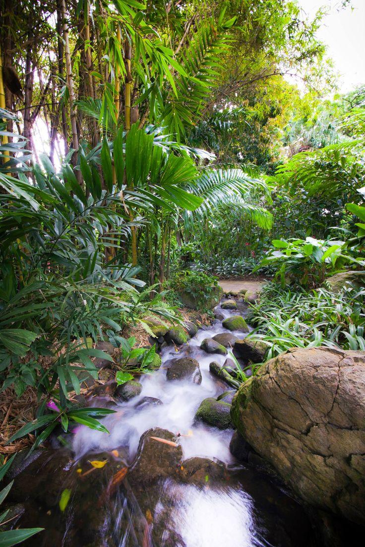 Jardin Botanique- Botanic garden-Guadeloupe