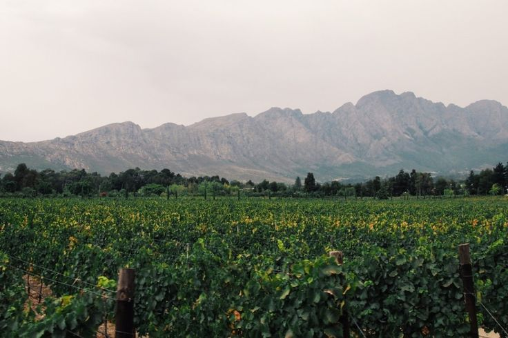 Franschhoek Wine Tram by Tails of a Mermaid. #TravelBloggers