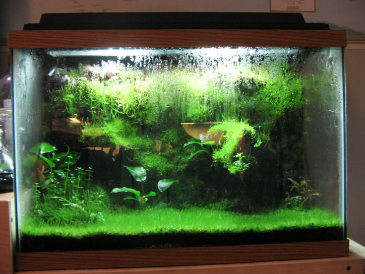 Fancy Fish Tanks 34 best fancy fish board images on pinterest   aquarium ideas