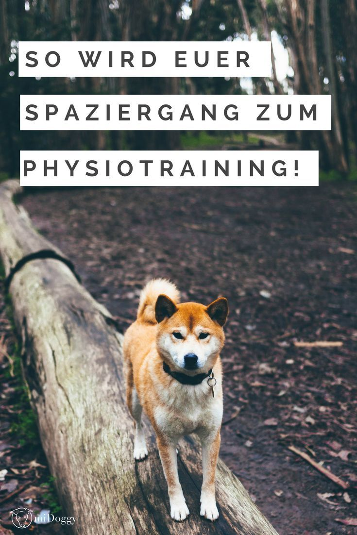 Dein Hund ist ein Bewegungsmuffel? Hier erfährst du, wie du das ändern kannst und gleichzeitig noch Physiotraining mit ihm machen kannst.