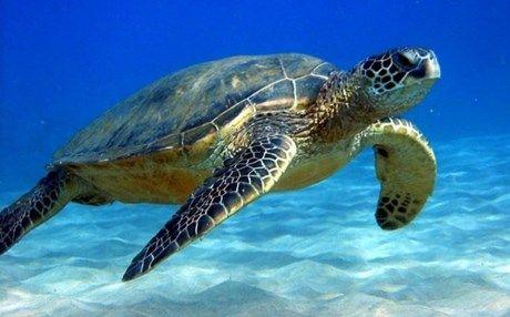 [News]: Ψάχνουν τους δράστες που αποκεφάλισαν θαλάσσιες χελώνες στη Νάξο | http://www.multi-news.gr/news-psachnoun-tous-drastes-pou-apokefalisan-thalassies-chelones-sti-naxo/?utm_source=PN&utm_medium=multi-news.gr&utm_campaign=Socializr-multi-news