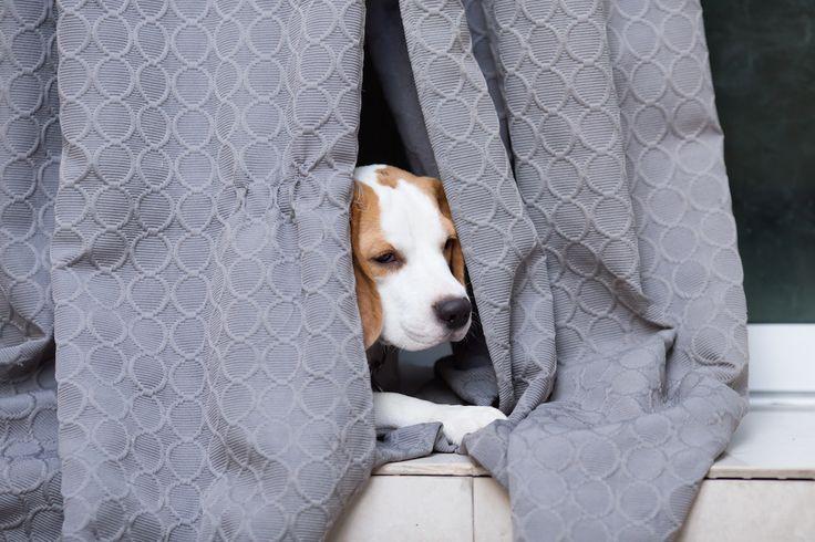 Wordt jehuisdier bang als het vuurwerk losbarst in de stad? Met deze tips beleven je huisdieren de jaarwisseling zonder stress!