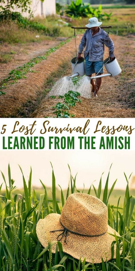 5 Lost Survival Lessons I Learned from the Amish - The author presents some great lessons to be learned from the Amish. These societies hold onto ancient knowledge that should never be forgotten. In our world today it may seem like knowledge that doesn't go very far or seems irrelevant but its far from that.
