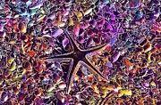 """New artwork for sale! - """" Starfish Wildlife Nature Ocean  by PixBreak Art """" - http://ift.tt/2vEKcuM"""