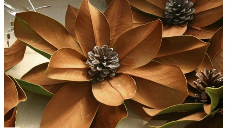 Natural dried flower from Magnolia Leaves and Pine Cone.