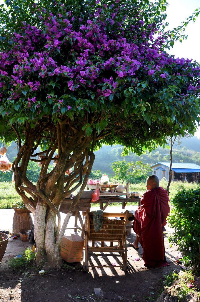 Burmese monk under flower three