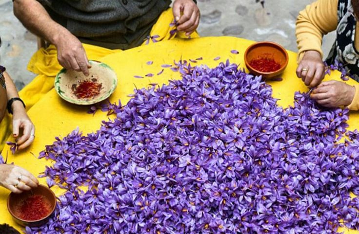 Spring has sprung! Did you know that #saffron comes from purple crocus? Yes it's true but only the crocus that grow in the fall. One of the most expensive food products in the world saffrons outrageous cost is due to the labor intensive process of obtaining the small threadlike stigma of which there are only three per flower. No wonder saffron is so precious -- here's the crazy part -- it takes 75000 flowers yielding 225000 stigmas to create a single pound of saffron! Saffron can cost…