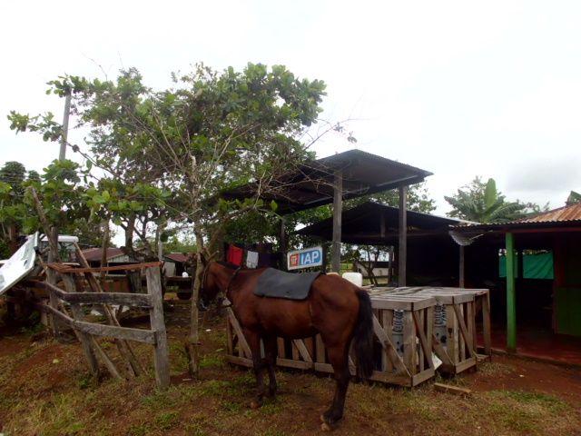 DHOC. Las Guacamayas. MUCAPOC