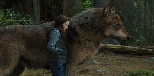 wolf twilight | Twilight Eclipse DVD Bonus: Bella und der Wolf » Szene, Bonusmaterial ...