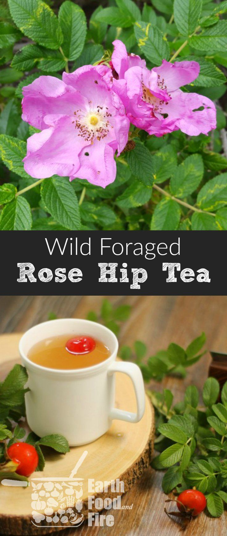 A tart and slightly fruity tea made with foraged wild rose hips, this drink is excellent for use in combating colds and flus due to it's high Vitamin C content. #rosehips #tea #foraging #healthy via @earthfoodandfire