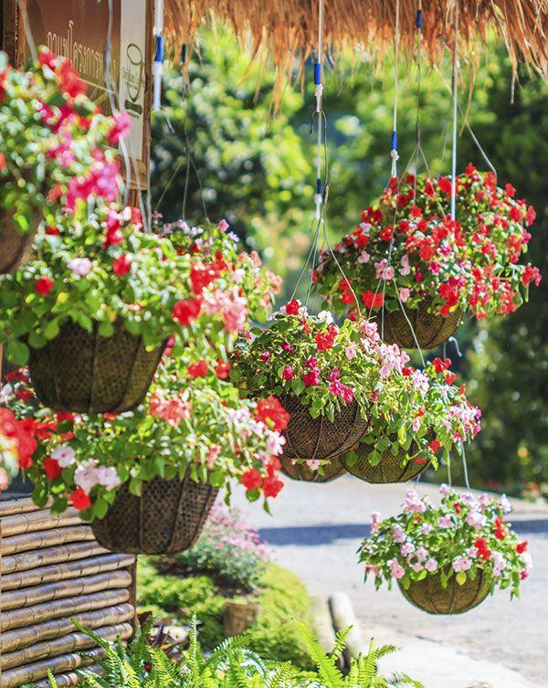 Vasos suspensos para jardins pequenos