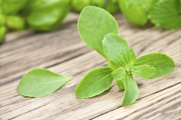 سكر ستيفيا للرجيم والسيطرة على الوزن Stevia Liquid Stevia Low Carbohydrate Diet