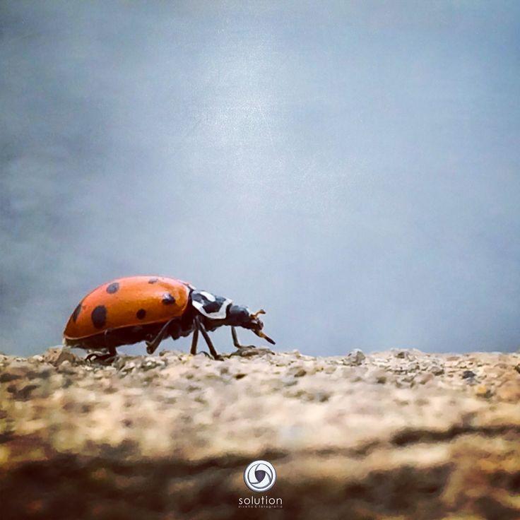 De paseo por la naturaleza