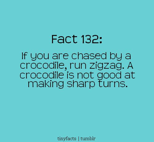 Crikey!  Well if I ever come in contact with this amphibious beast I will be sure to run in a zig-zag pattern!