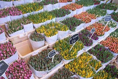 'Tulips' by stevecadman. CC SA 2.0