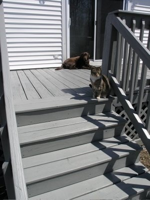 16 Best Images About Deck Colors On Pinterest Stains