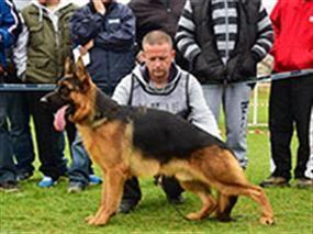 Macaristan Şampiyonası'nda Petworld Rüzgarı