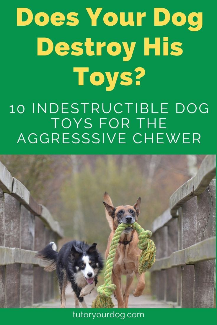 The Top 10 Best Indestructible Dog Toys For Aggressive Chewers In